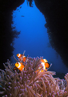 "<img src=""intermediate-digi-photo-diver-tioman.jpg"" alt=""Intermediate Digi-Photo Diver, Tioman"" />"