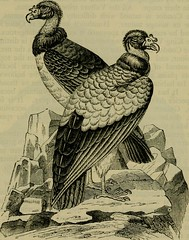 """Image from page 620 of """"Reptiles and birds : a popular account of their various orders, with a description of the habits and economy of the most interesting"""" (1883)"""