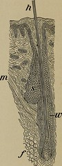 """Image from page 186 of """"The human body and health : an elementary text-book of essential anatomy, applied physiology and practical hygiene for schools"""" (1908)"""