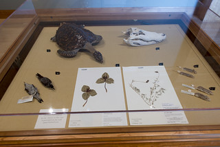 Specimens from Auburn University's Museum of Natural History.