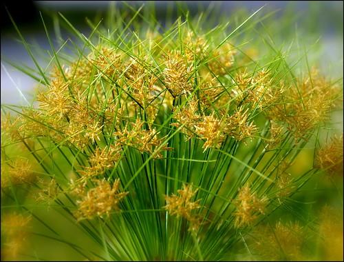 flowers jardinbotaniquedemontréal