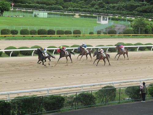 佐賀競馬場の最後の直線