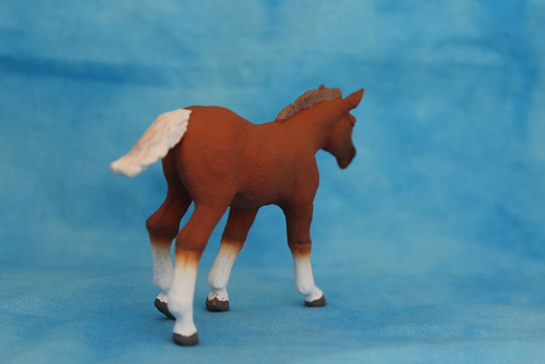 Walkaround of the 2014 Mojo Fun Suffolk Punch Foal 15061505421_d6287b0718