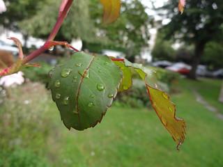 Rain drops, nearby