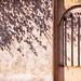 shadow and door by MahshidSohi