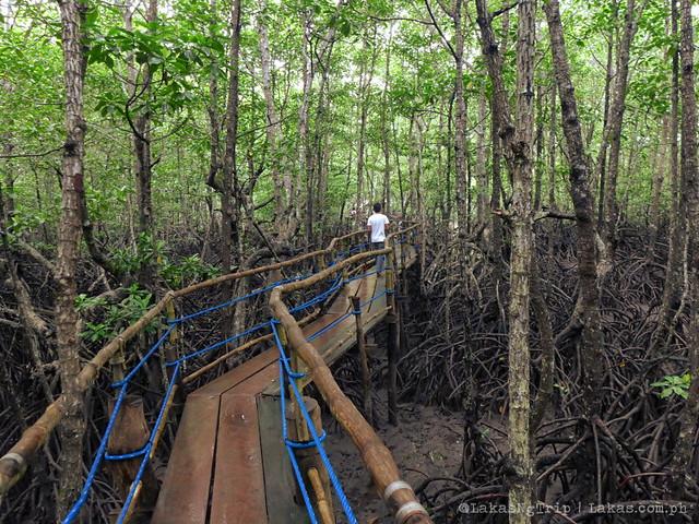 Mangrove Eco Park. El Nido, Palawan, Philippines.