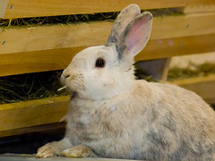 Rascal E Rabbit