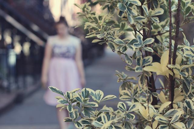 lavenders_7