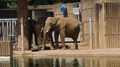 memphis Zoo Elephants - 12 Second Video