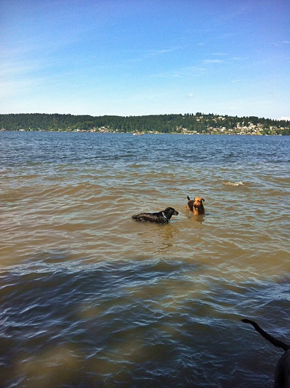 Maggie in Lake Washington