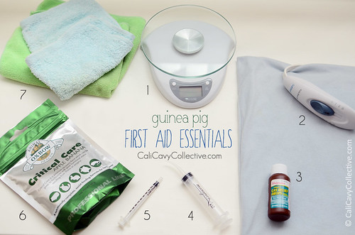 Guinea pig first aid essentials