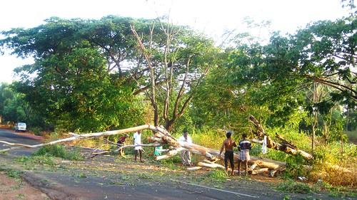 Fallen tree on the highway