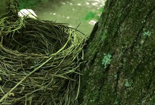 Burke Lake Park: Nest