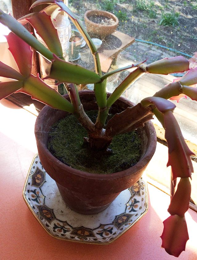 potted succulent plants, afternoon sunshine