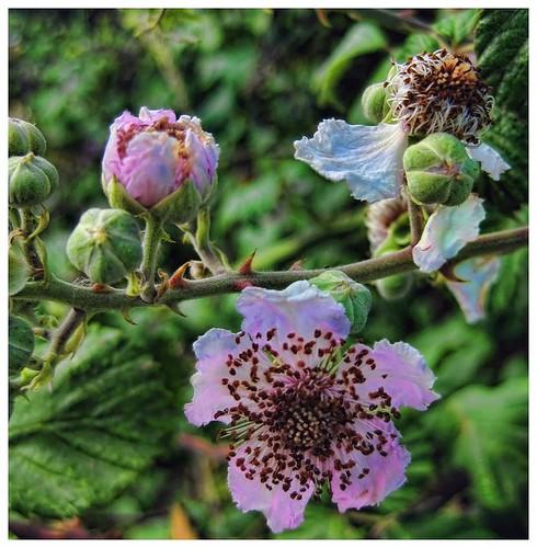 Rosas-y-espinas