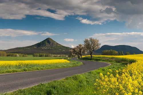 tavasz tájkép gulács balatonfelvidék repce