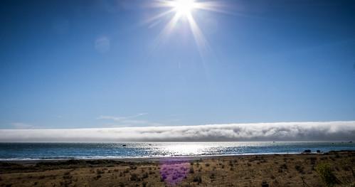 Coastal Redwoods and Fog-100