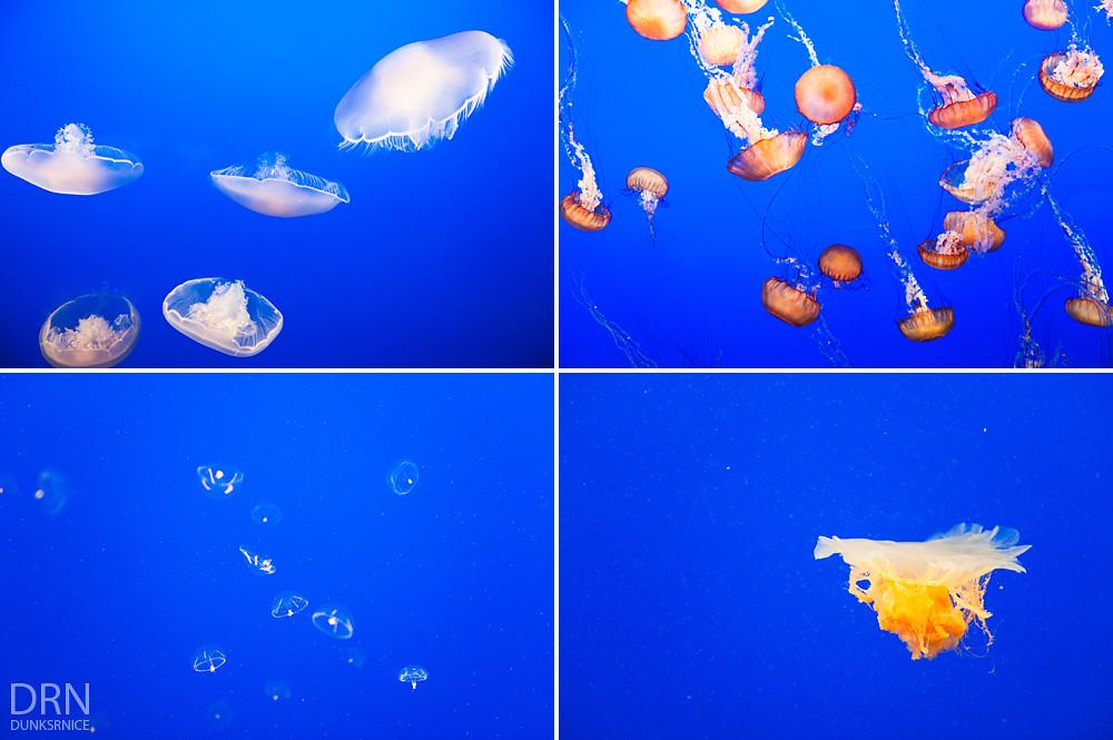 Monterey Bay Aquarium - 2014