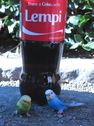 Coke and parrots. :)