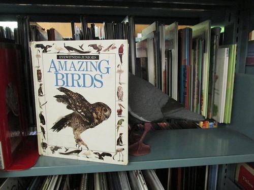 Amazing Bird(s)