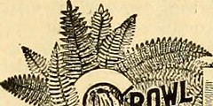 "Image from page 236 of ""The American florist : a weekly journal for the trade"" (1885)"