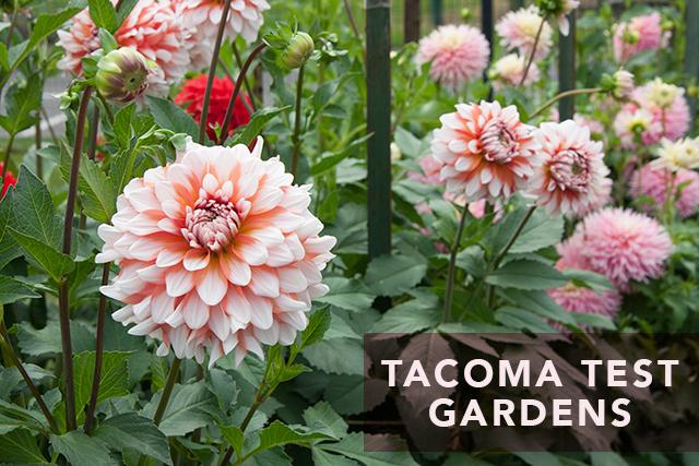 tacoma-test-garden