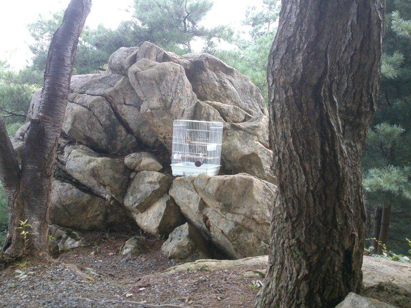 月明洞自然聖殿-畫眉鳥