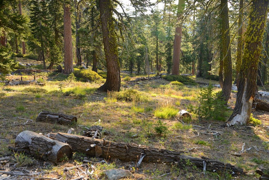 Kangaroo lake campground map siskiyou county california for Lake siskiyou resort cabins