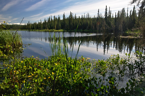 summer green alaska trails bluesky trail fairbanks uaf smithlake universityofalaska