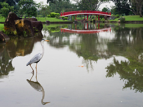 Great Heron, Japanese Gardens