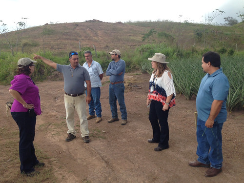 NRCS staff members visit with Puerto Rico pineapple farmers in Lajas, Puerto Rico.