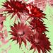 UNUSUAL RED FLOWERS