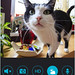 Mydlink app with cat