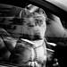 dog in a car ll by ✪ patric shaw