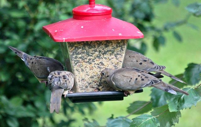 4 on feeder