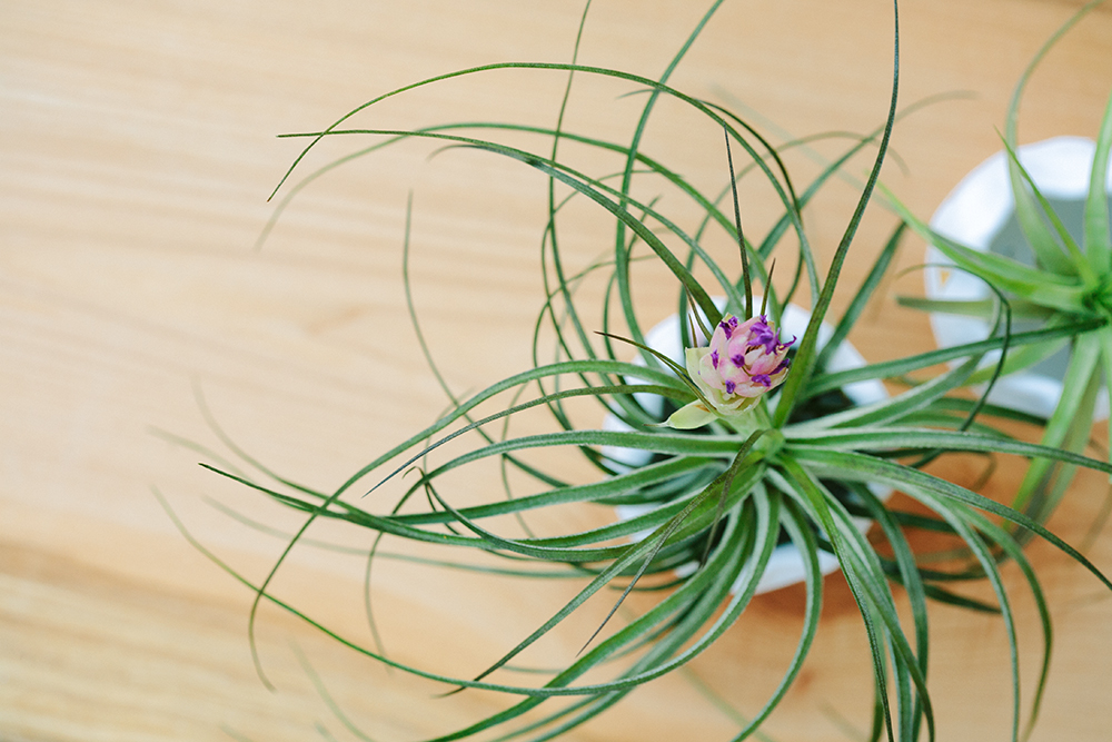 airplants_2_web