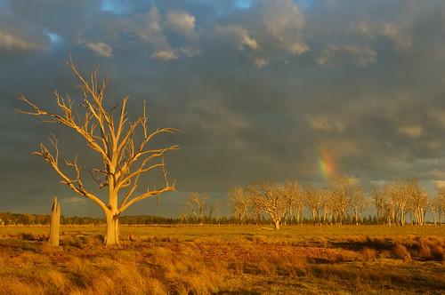 sunset storm rainbow australia newsouthwales aus lonetree wallalong paulhollins