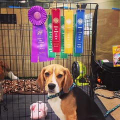 Dylan's loot from the weekend! His double QQ from yesterday and his 3rd Ex JWW leg for his AXJ!! Both dogs messed up their weaves in STD today and Dax ran clean but still didn't make time for JWW. Now we are all done for this weekend!