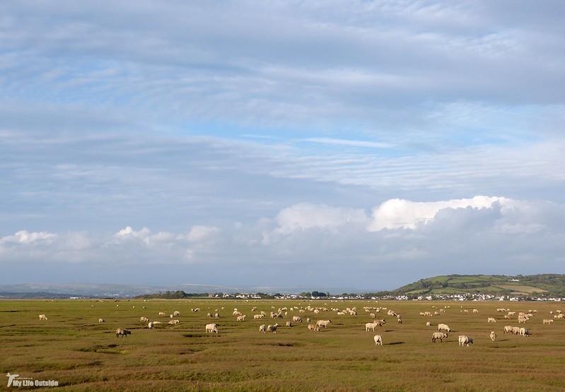 P1080671 - Llanrhidian Marsh, Gower