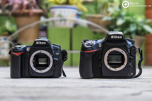 5 Aspects In Choosing The Best DSLR (Body) For Macro Photography ...