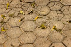 soil, cobblestone, road surface,