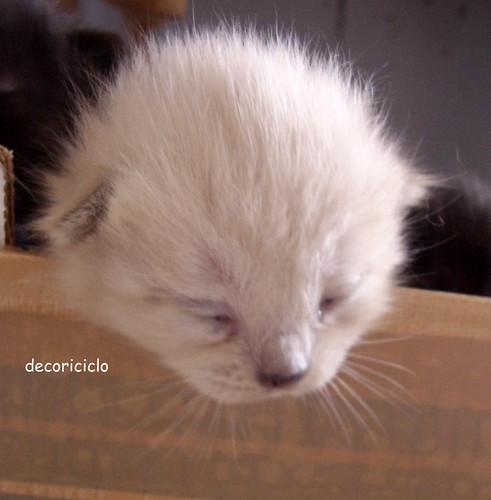 gattini seconda settimana 4