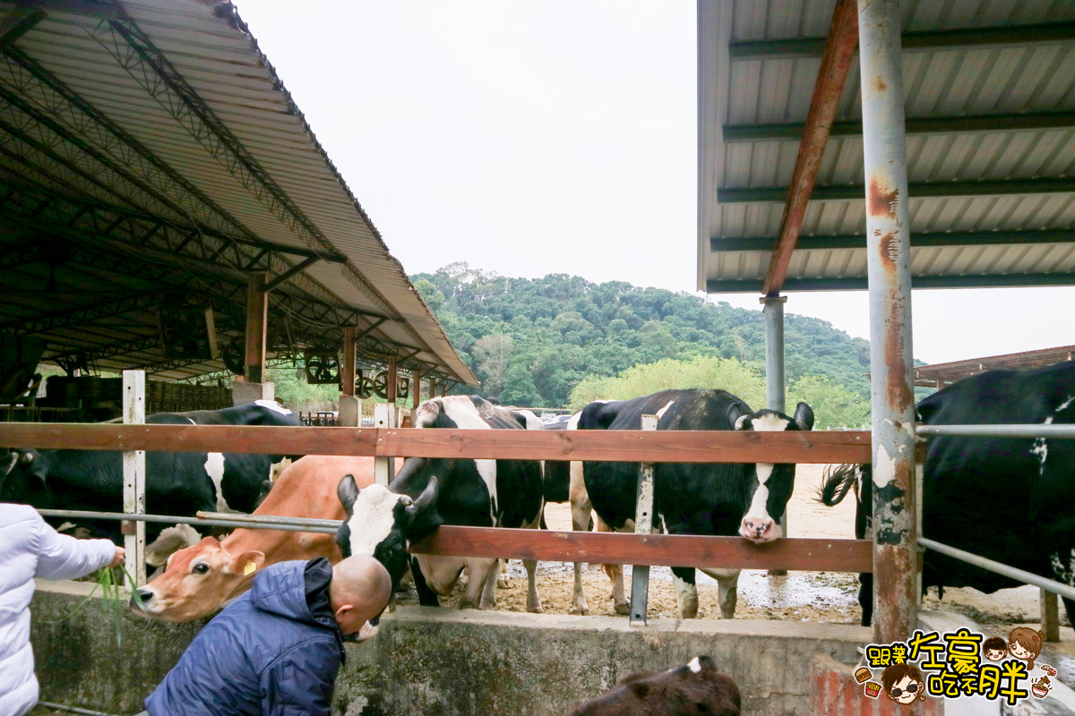 台中大山牧場-2