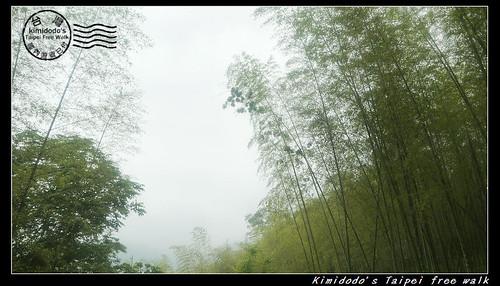 天梯 (21)