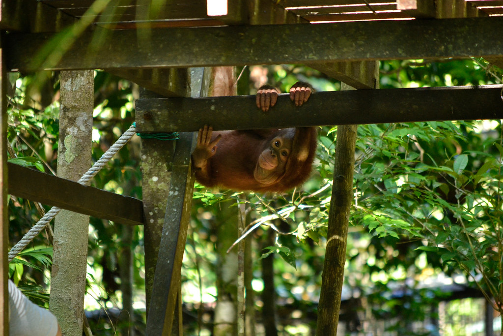 Sarawak, Matang Wildlife Centre - South East Asia