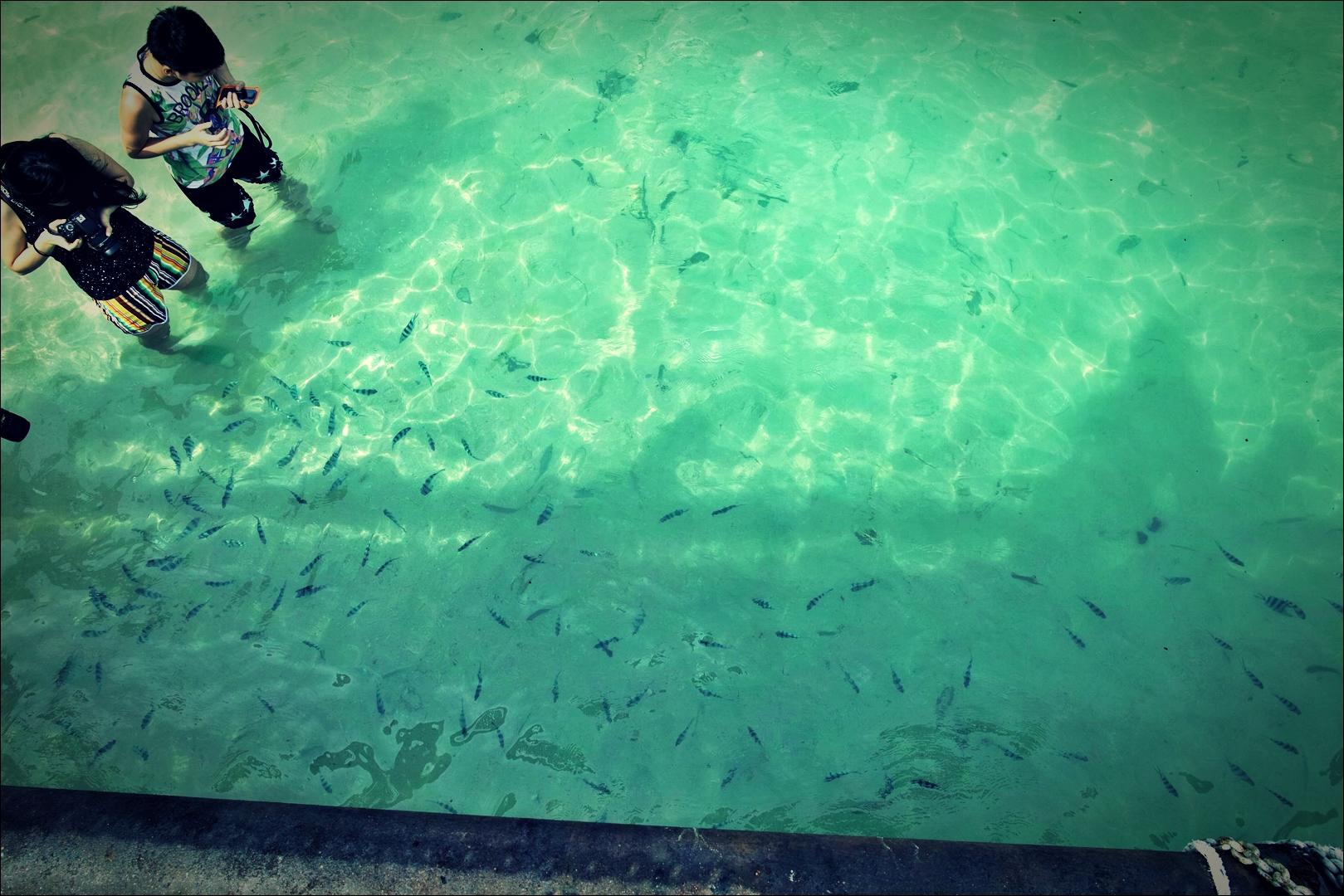 선착장 물고기-'코타키나발루 마누칸 섬 Manukan Island Kota Kinabalu'