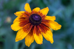 2014_07_20_kwiatki