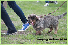 Jumping_Deinze_27-07-2014-207