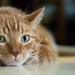 Caturday, July 12th by Mars Observer ♂