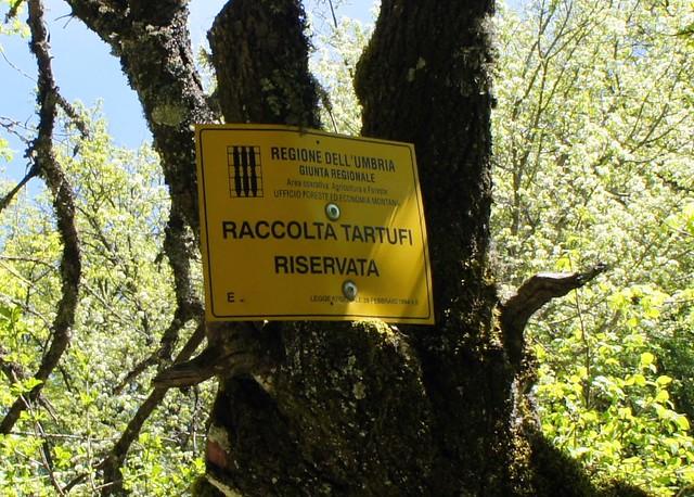 truffle-reserve-umbria-cr-brian-dore